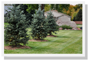 New trees at AWCC
