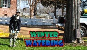 winter watering